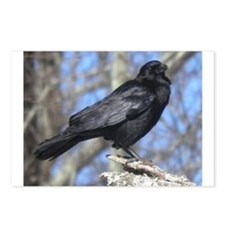 Crow perched Postcards (Package of 8)