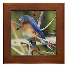 Red Bud Bluebird Framed Tile