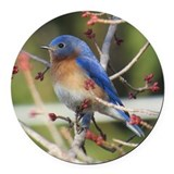 Bluebird Round Car Magnets