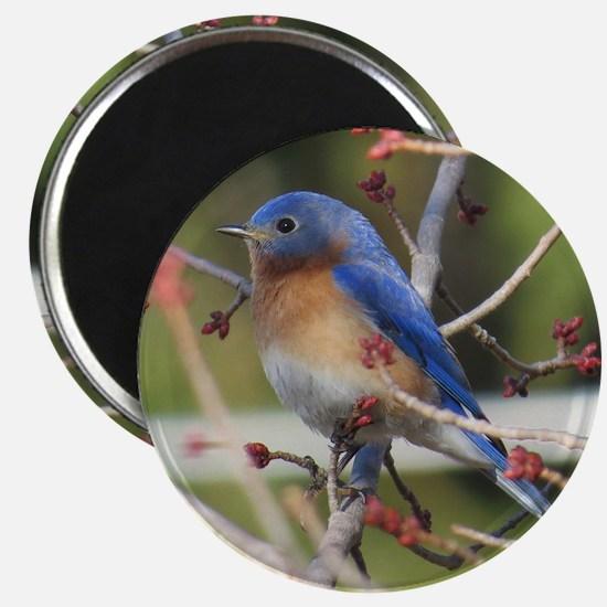 Red Bud Bluebird Magnets