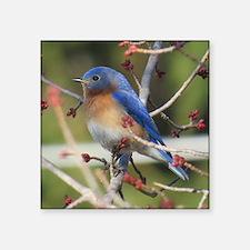 Red Bud Bluebird Sticker