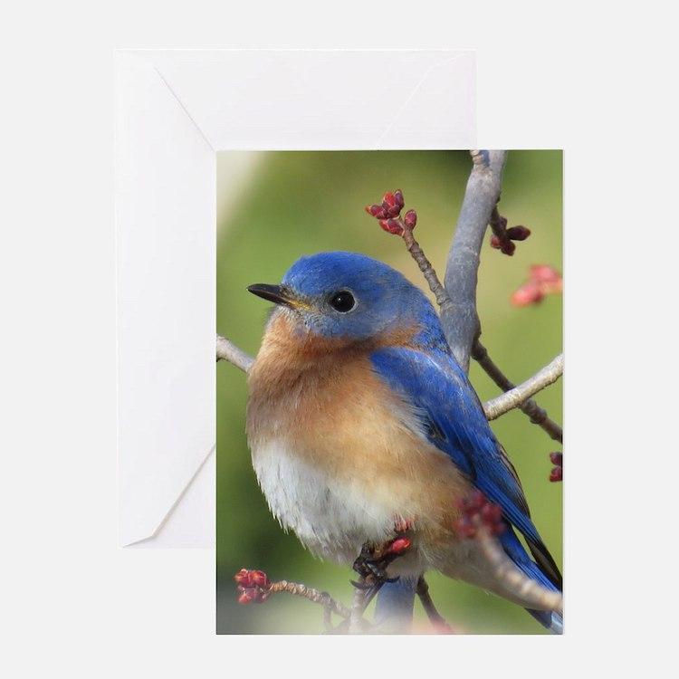 Red Bud Bluebird Greeting Cards