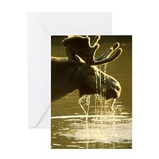 Moose Dipping His Head Into Water Greeting Card