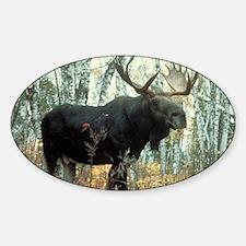Huge Moose Decal