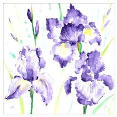 Watercolor Abstract Iris Pattern Poster