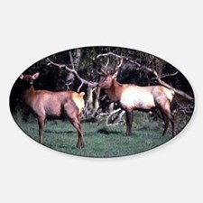 Roosevelt Elk  Decal