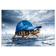 Turtle With Cap  Poster