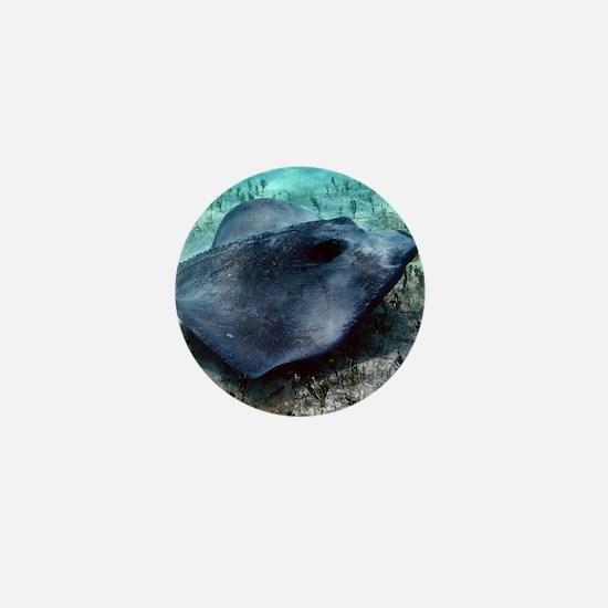 Southern Stingray Mini Button