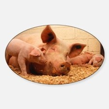 Sow and Piglets Decal
