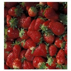 Bushel of Strawberries  Canvas Art