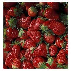 Bushel of Strawberries  Poster