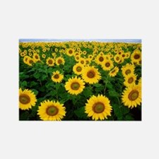 Field of Sunflowers Rectangle Magnet