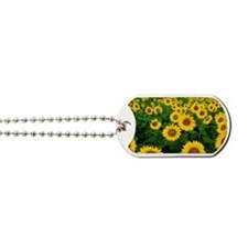 Field of Sunflowers Dog Tags
