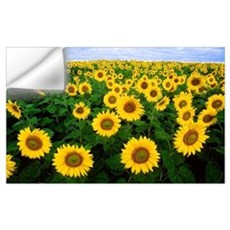 Field of Sunflowers Wall Decal