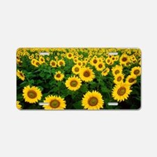 Field of Sunflowers Aluminum License Plate