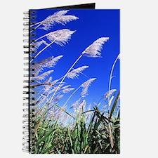 Sugarcane Field Journal
