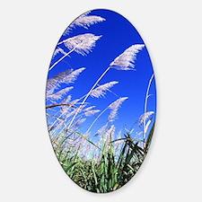 Sugarcane Field Sticker (Oval)