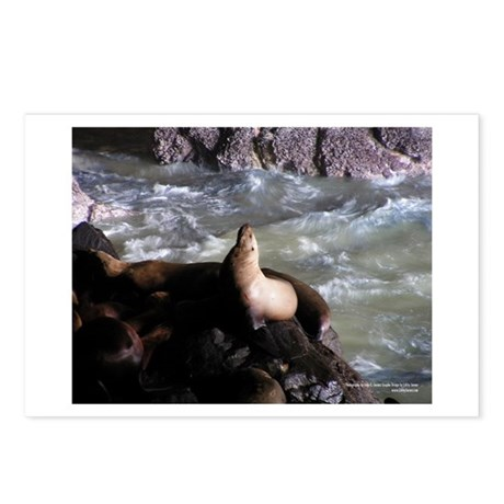 Seals Postcards (Package of 8)