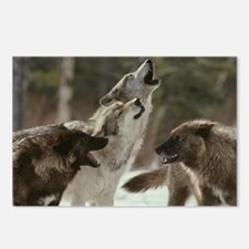 Winter Wolves Howling Postcards (Package of 8)
