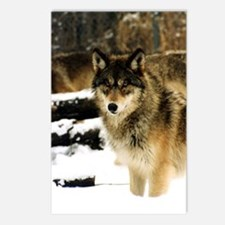 Wolves in The Snow Postcards (Package of 8)
