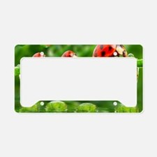 Cute Ladybug License Plate Holder