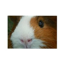 Cavy 1 Rectangle Magnet