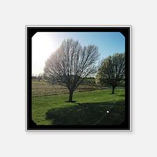 """Sunny Gate Farm Square Sticker 3"""" X 3"""""""