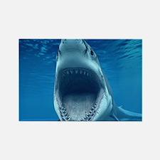 Big White Shark Jaws Magnets