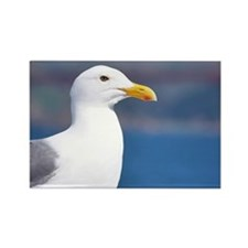 western gull Rectangle Magnet