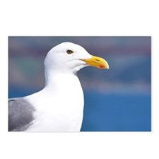 western gull Postcards (Package of 8)