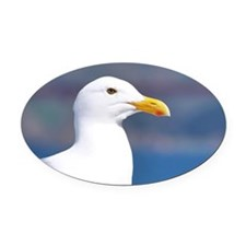 western gull Oval Car Magnet