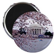 "Cute Washington dc cherry blossom 2.25"" Magnet (10 pack)"