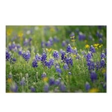Bluebonnets Postcards (Package of 8)