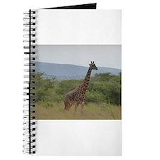 Giraffe of Akagera Journal