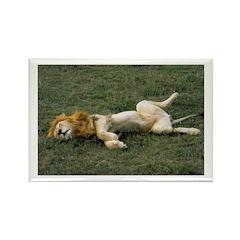 Lion Birthday Rectangle Magnet