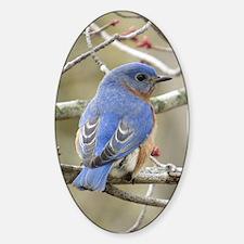 Backside Bluebird Decal