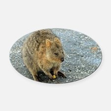 Cute Quokka Oval Car Magnet