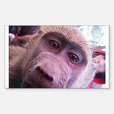 Baboon Rectangle Decal