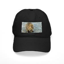 Cute Quokka Baseball Hat