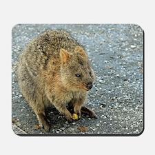 Cute Quokka Mousepad