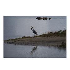 Great Blue Heron Postcards (Package of 8)
