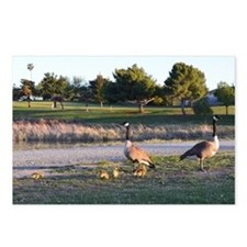 Unique Wild geese Postcards (Package of 8)