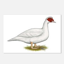 Duck White Muscovy Postcards (Package of 8)