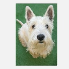 Cute Westie Postcards (Package of 8)