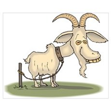 Cartoon Funny Old Goat Poster