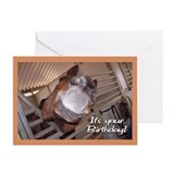 Birthday horse Greeting Cards
