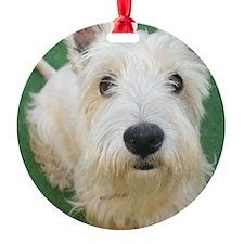 Cute Westie Ornament