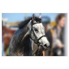 Portrait of the Grey Race Horse Poster