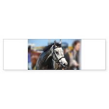 Portrait of the Grey Race Horse Bumper Bumper Sticker