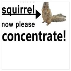 Concentrate on the squirrel Framed Print
